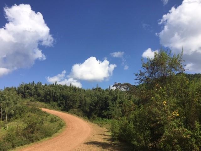 path between bushes