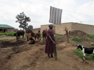 woman with livestock in Uganda