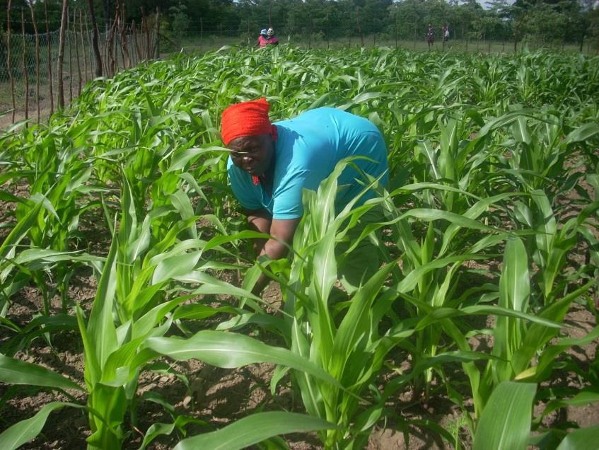 people working in field, Zimbabwe